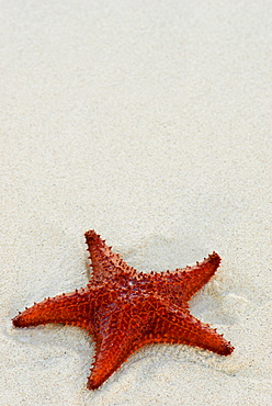 Starfish against a plain white background