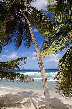 Beach, palm trees and surf in Long Bay, Tortola, British Virgin Islands, West Indies, Caribbean, Central America