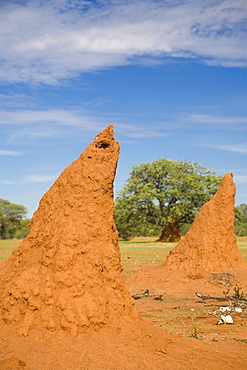 Conical shaped mounds created by a termite colony, Namibia, Africa