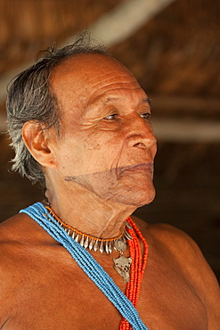 Medicine man with facial tattoo, healer of tribe of Embera indigenous people, Panama, Central America