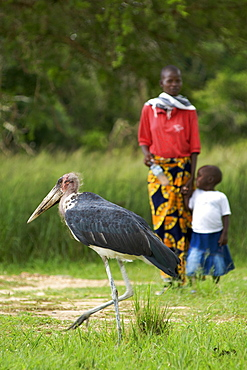 Marabou stork and a Ugandan woman with her child in Murchison Falls National Park in Uganda.