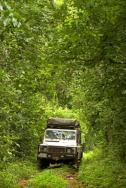 Land Rover Defender in the Budongo Forest Reserve in Uganda.