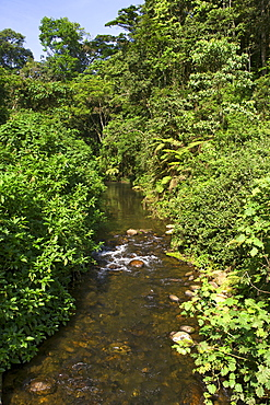 A river in the Bwindi Impenetrable National Park in southern Uganda.