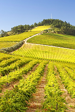 View across vineyards of the Stellenbosch district, Western Cape Province, South Africa.