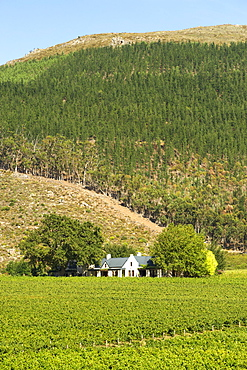 Vineyards and manor house of the Glenwood wine estate in Franschhoek, Western Cape Province, South Africa.
