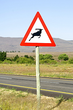 Warning sign for antelope on a highway in South Africa's Karoo region.