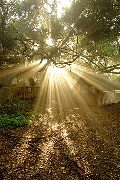 Rays of early morning sunlight streaming through tree branches in the Tsitsikamma National Park along the Garden Route in South Africa's Western Cape province.
