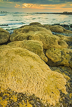 Intertidal sand reef made by the sandcastle worm, Playa Guiones beach, Nosara, Nicoya Peninsula, Guanacaste Province, Costa Rica, Central America