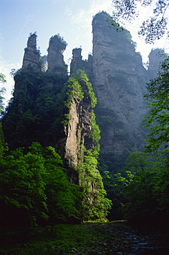 The spectacular limestone outcrops and forested valleys of Zhangjiajie Forest Park, Wulingyuan Scenic Area, UNESCO World Heritage Site, Hunan, China, Asia