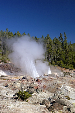 Minor eruption from Steamboat Geyser, Norris Geyser Basin, Yellowstone National Park, UNESCO World Heritage Site, Wyoming, United States of America, North America