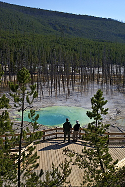 Visitors at Cistern Spring, Norris Geyser Basin, Yellowstone UNESCO World Heritage Site, Wyoming, United States of America, North America