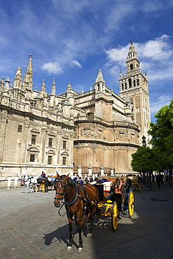 Horse-drawn carriage, Seville Cathedral (Catedral Sevilla), UNESCO World Heritage Site, Andalucia, Spain, Europe
