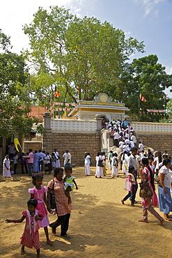 Buddhist pilgrims Sri Maha Bodhi, sacred bodhi tree planted in 249 BC, Unesco World Heritage Site, Anuradhapura, Sri Lanka, Asia