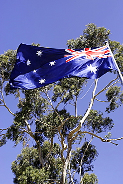 Australian flag and eucalyptus tree