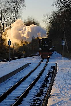 Rasender Roland, Ruegen narrow gauge train, historic steam-powered narrow gauge railway and tourist attraction at the entrance to Baabe station, Ruegen, Mecklenburg-Western Pomerania, Germany, Europe