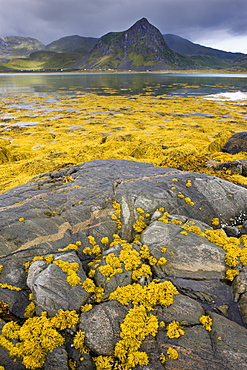 Malnes, island of Vestvagoya, Lofoten, Norway, Scandinavia, Europe