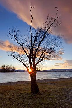 Sunset on Reichenau island, Lake Constance, Baden-Wuerttemberg, Germany, Europe