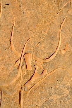 Rock engraving of a crying cow, neolithic rockart near Djanet, Tassili n'Ajjer National Park, Unesco World Heritage Site, Wilaya Illizi, Algeria, Sahara, North Africa, Africa
