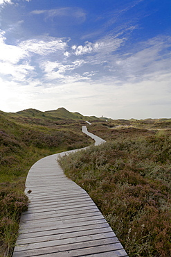 Dune landscape near Norddorf, Amrum Island, North Sea, North Friesland, Germany, Europe