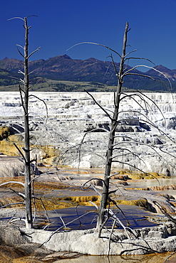 Canary Spring Terrace, limestone sinter terraces, geysers, hot springs, in front of Mount Everts, Mammoth Hot Springs Terraces in Yellowstone National Park, Idaho, Montana, Wyoming, America