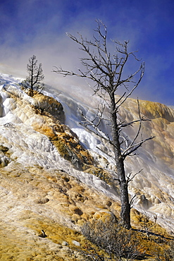 Devil's Thumb, Palette Spring Street, Lower Terraces, limestone sinter terraces, geysers, hot springs, colorful thermophilic bacteria, microorganisms, petrified trees, Mammoth Hot Springs Terraces in Yellowstone National Park, Wyoming, United States of Am