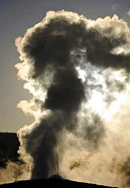 Eruption of the Old Faithful geyser, Upper Geyser Basin, geothermal springs in Yellowstone National Park, Wyoming, United States of America, USA