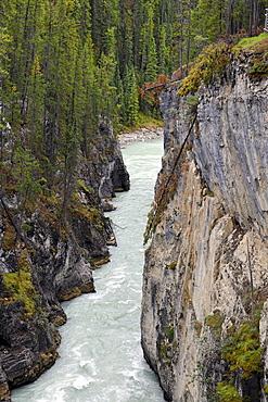 Athabasca Falls waterfall, Athabasca River, Jasper National Park, Canadian Rockies, Rocky Mountains, Alberta, Canada