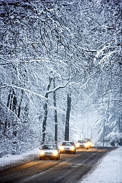 Driving in winter, vehicles on a cleared road in a snow-covered forest with falling snow, Essen, North Rhine-Westphalia, Germany, Europe