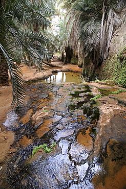 The oasis of Tirjit, near Atar, Mauretania, northwestern Africa
