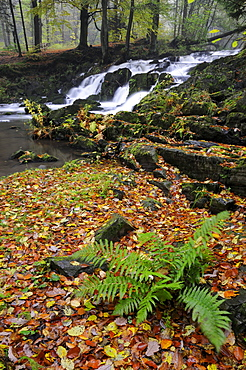 Waterfall in the Selketal valley in autumn, Harz mountain range, Saxony-Anhalt, Germany, Europe