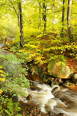 Ilse river near Ilsenburg in autumn, Harz mountain range, Saxony-Anhalt, Germany, Europe