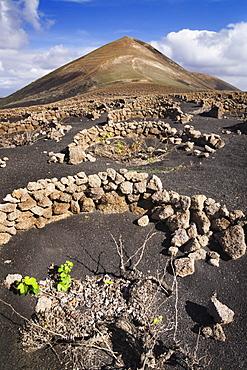 Montana Guardilama mountain and traditional wine growing, La Geria, Lanzarote, Canary Islands, Spain, Europe