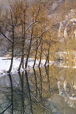 Trees reflected in the Danube, Naturpark Obere Donau nature park, Swabian Alb, Baden-Wuerttemberg, Germany, Europe