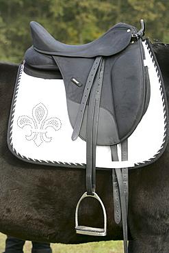 Saddle with saddle blanket on a dressage horse