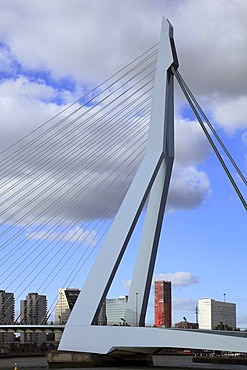 Cable-stayed bridge Erasmusbrug or Erasmus bridge, pylon, Kop van Zuid, Rotterdam, Holland, Netherlands, Europe