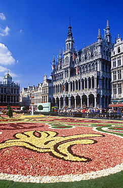 Carpet of flowers on the Grote Markt square, also called Grand Place square, Maison du Roi building, also known as Breadhouse, which accommodates the municipal museum, Brussels, Belgium, Europe