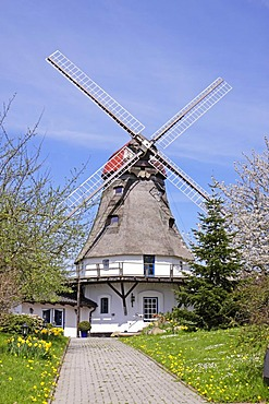 Windmill in Klein Groedersby, Schlei, Schleswig-Holstein, Germany, Europe