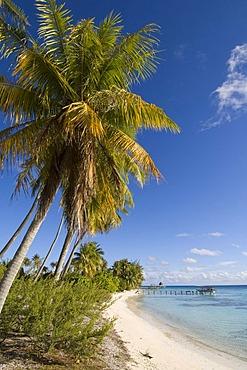 Beach, Fakarava, Havaiki-te-araro, Havai'i or Farea atoll, Tuamotu Archipelago, French Polynesia, Pacific Ocean