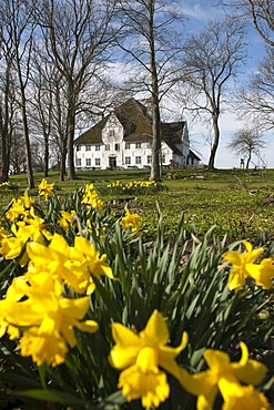 """The """"Rote Haubarg"""", a former big farmer's house, now a restaurant, cafe and museum, Witzwort, North Friesland, Schleswig-Holstein, northern Germany, Europe"""