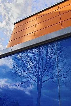 Reflection of a tree in a blue glass facade, Bonn, North Rhine-Westphalia, Germany, Europe