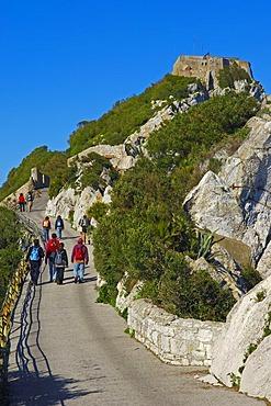 People walking to the top of The Rock of Gibraltar, British overseas territory, Iberian Peninsula, Europe