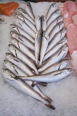 Sale of fresh fish, Mercado Central, Valencia, Comunidad Valenciana, Spain, Europe