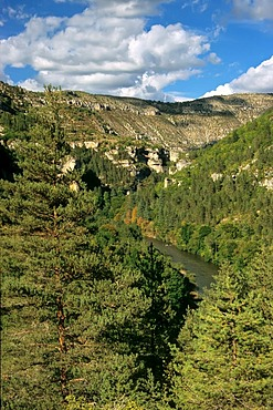 Gorge of the River Tarn, Gorges du Tarn, Cevennes, France, Europe