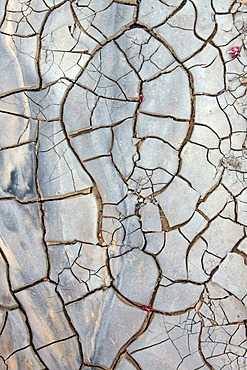 Desiccation cracks in a riverbed in the desert, Wadi in the Dana Nature Reserve near Feynan, Hashemite Kingdom of Jordan, Middle East, Asia