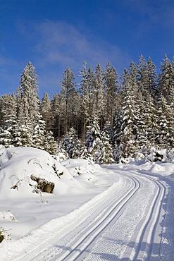 Cross-country ski trail in the snow-covered forest, Gutenbrunn Baernkopf biathlon and cross country ski center, Waldviertel, Lower Austria, Austria, Europe