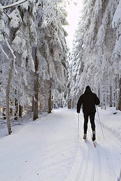 Cross-country skier, classic style, in the snow-covered forest, Gutenbrunn Baernkopf biathlon and cross country ski center, Waldviertel, Lower Austria, Austria, Europe