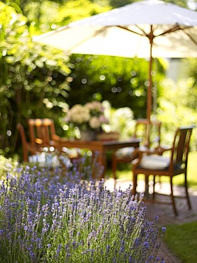 Romantic garden table with lavender bushes in atmospheric sunlight