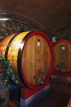 Wine barrel, wine cellar in the Brunello winery, Fattoria dei Barbi, Podernovi, Montalcino, Tuscany, Italy, Europe