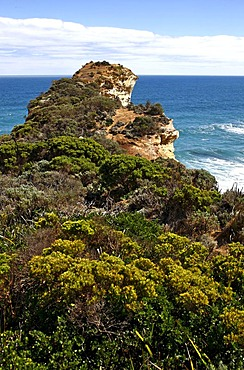 Vegetation and coastal cliffs, Great Ocean Road, Port Campbell National Park, Victoria, Australia
