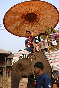 Decorated elephant, Mahout riding under sunshade, Elephant Festival Parade, Ban Viengkeo, Hongsa, Xaignabouri Province, Sayaburi, Xayaburi or Sainyabuli, Laos, Southeast Asia, Asia